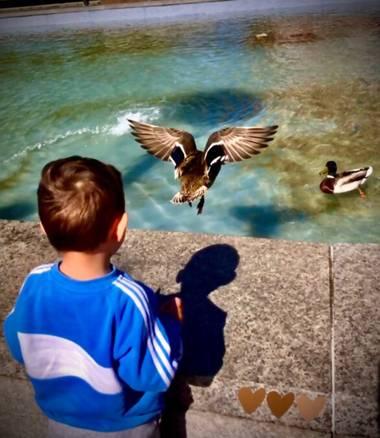 Sayurigion en Hamelin: Fauna