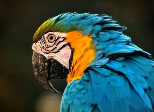 José Viana en Hamelin: Fauna  (Caracas), #plumaje #colores #avestropicales