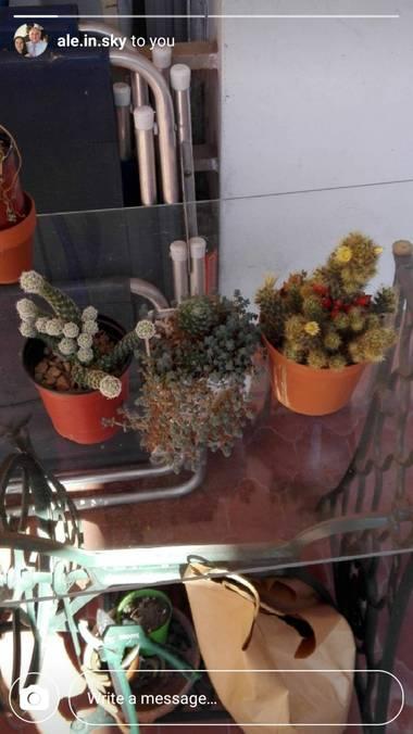 Martin.belinsky89 en Hamelin: Flora, #Flora21