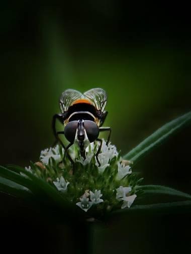 sujkp83 en Hamelin: Fauna