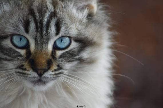 Rakel.536 en Hamelin: Fauna, #otoño2020 #faunaespañola #cat #macrophoto2020