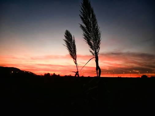 Iman.akhrouf en Hamelin: Flora  (Alhaurín el Grande), #parquesyjardines #paisajes