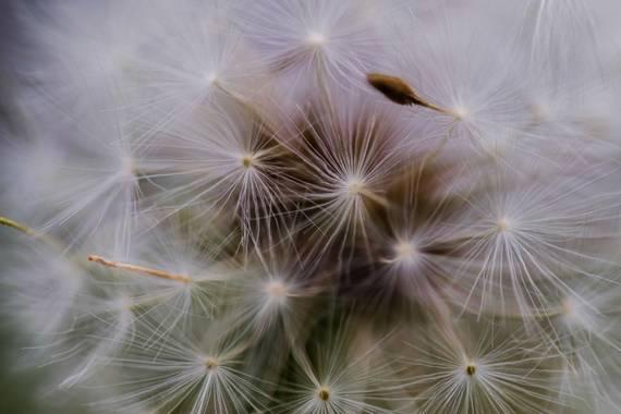 AneruY en Hamelin: Flora  (El Sauzal), #flora21