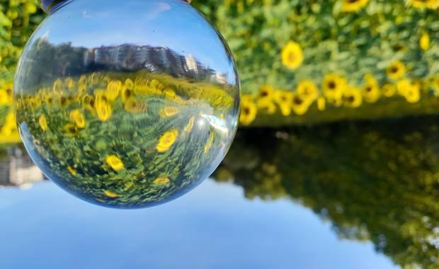 Manelsersol en Hamelin: Flora  (Olot), #Flores #Flowers #naturaleza2021
