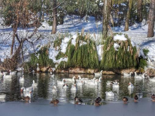 María G Terrones en Hamelin: Fauna  (Móstoles), Estanques congelados en el sur de Madrid #Invierno20