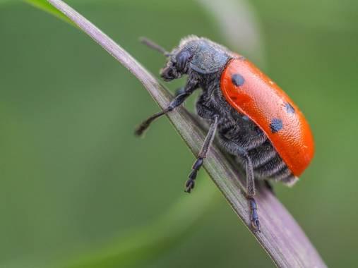 xeni_bejar en Hamelin: Fauna  (La Nina)