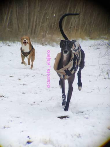 carreteviajero en Hamelin: Fauna  (Tudela de Duero), Mis dos perros disfrutando de la nieve, mientras yo disfruto del móvil con el teleobjetivo apexel 20x-...
