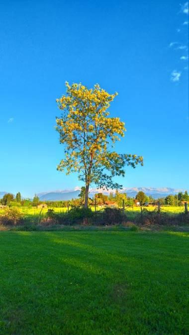 Camachovicente304 en Hamelin: Paisaje  (Linares), Tarde soleada en campo Linares. #hamelin