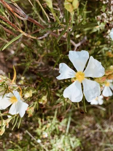 carogv1995 en Hamelin: Flora  (Mula), #flora21 #bellezasinfiltros
