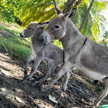 santiago.zamora01 en Hamelin: Fauna  (Cimitarra), #maya  #pachito