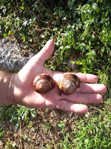 Nuriarodrimolina en Hamelin: Fauna  (La Nou)