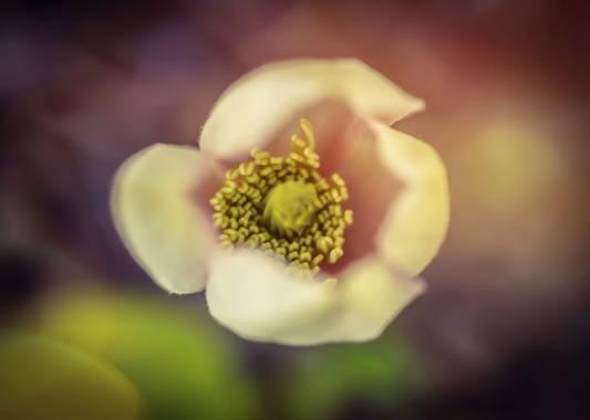 rqsalcedo en Hamelin: Flora  (Paracuellos de Jarama), #flores2021 #flora21