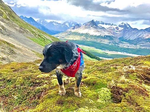 NachoCanalesfotografia en Hamelin: Paisaje  (Ushuaia), Shelter en su lugar favorito, las montañas #doglover #perro #perros #montaña  #patagoniaargentina