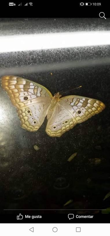 Alejillo01234 en Hamelin: Fauna