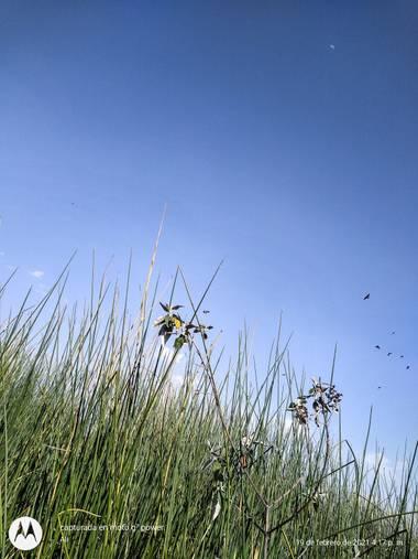 alincithask8.hdezglez en Hamelin: Paisaje, #naturaleza#fotocelular#paisajes#tlaxcalitalabella
