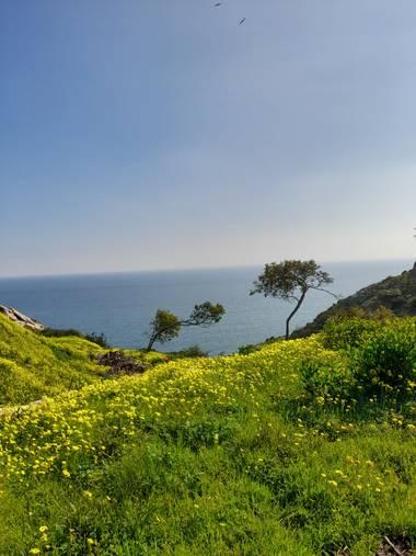auricahk en Hamelin: Paisaje, Costa Del Sol Manilva Spain