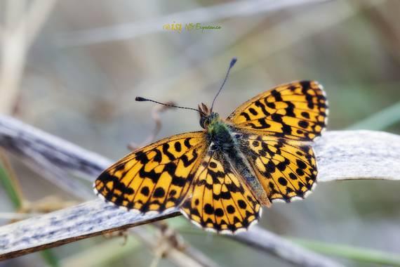 isidorogomez53 en Hamelin: Fauna  (Castellar del Vallès), #apfb  #insectosdecataluña  #insectosdeespaña