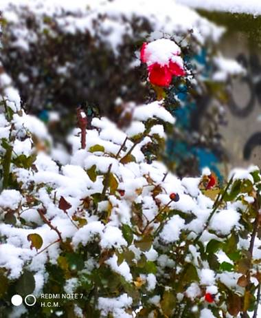 Héctor CM en Hamelin: Flora  (Fuenlabrada), Un poco de #color en #Invierno20