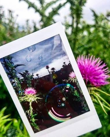 Bea San en Hamelin: Flora  (Madrid), Foto dentro de foto 📸🖼️ #parquesyjardines #parquedelcapricho #madrid #flora #florrosada #flor #fotoinstax