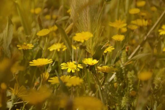 Nurialopezfotografia en Hamelin: Flora  (Alhendín), #flora21