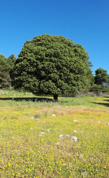 Juanly en Hamelin: Naturaleza de Jaén  - Proyecto  (Jaén)