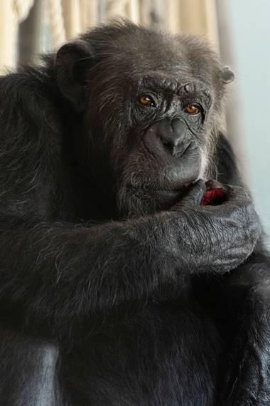 Bio_Blanca en Hamelin: Animales rescatados - Proyecto  (Villena)