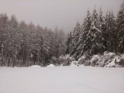 Korosti en Hamelin: Parque natural Aizkorri - Proyecto  (Oñati)
