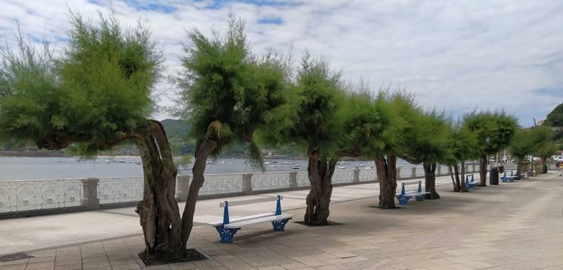 Jimenezchave en Hamelin: Nuestros árboles. Maravillas de la Naturaleza. - Proyecto  (Gipuzkoa)