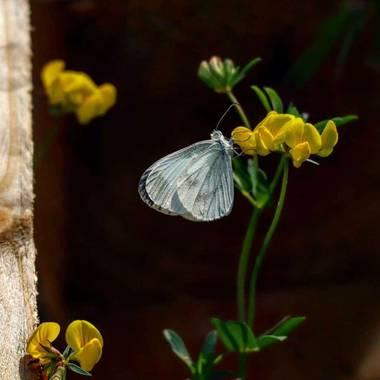 Darkphotos en Hamelin: Proyecto insectos: Mariposas - Proyecto  (España)