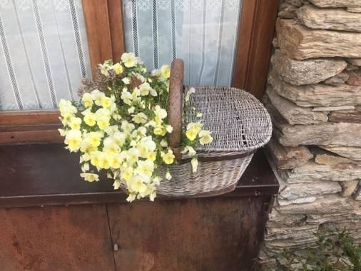 SantiagoMrv 🍀 en Hamelin: Plantas de casa - Proyecto  (El Mahdia)