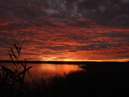 jaraverde15 en Hamelin: Laguna del Gosque - Proyecto  (Martín de la Jara)