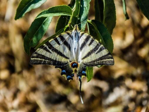 Ismael en Hamelin: Fotografía de insectos - Proyecto  (Ácula)