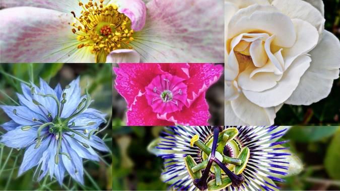 XᵢₓₐWₕᵢₜₑ en Hamelin: Flower Power  - Proyecto  (Bizkaia)