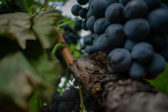 Fabriferrari7 en Hamelin: Wine - Proyecto  (Saint-Marcellin-lès-Vaison)