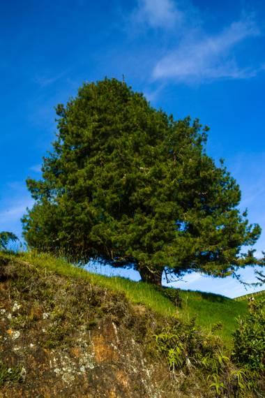 agomezacevedo9 en Hamelin: Panorama perpetuo  - Proyecto  (Santa Rosa de Osos)