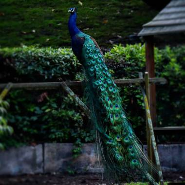 Darkphotos en Hamelin: Proyecto aves - Proyecto  (España)