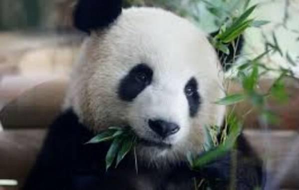 donajiqc en Hamelin: Animales en peligro de extinción - Proyecto  (El Paso)
