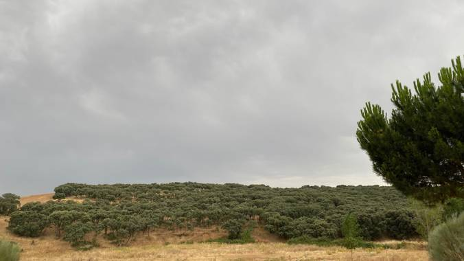 Juanjogomezdelgado en Hamelin: El Casar. Flora y Fauna.  - Proyecto  (El Casar)
