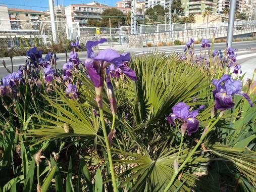 Ymglez92 en Hamelin: Anuncio de Primavera - Proyecto  (Tarragona)