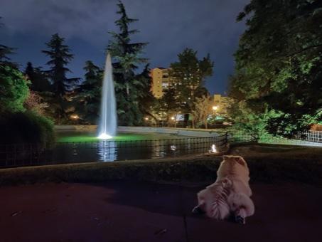 SantiagoMrv 🍀 en Hamelin: Biodiversidad en jardines de Madrid - Proyecto  (Madrid)