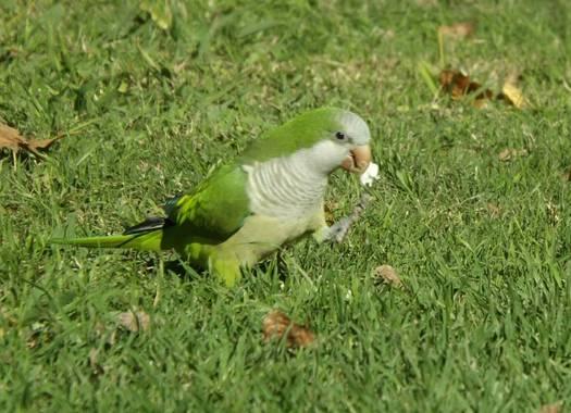 Federicadaluz en Hamelin: Aves 🐦🐤 - Proyecto  (Las Toninas)