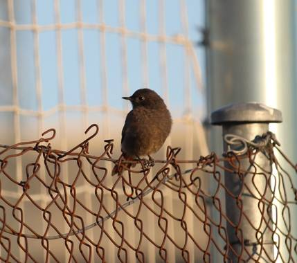 dalopri_ en Hamelin: Paparazzi de las aves (España) - Proyecto  (Segovia)