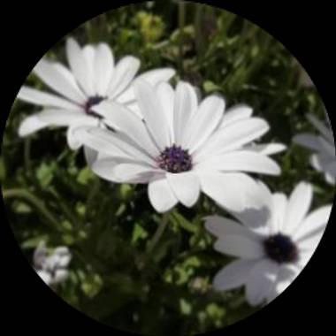 Usuario en Hamelin: lamaria_deviatge - Usuario