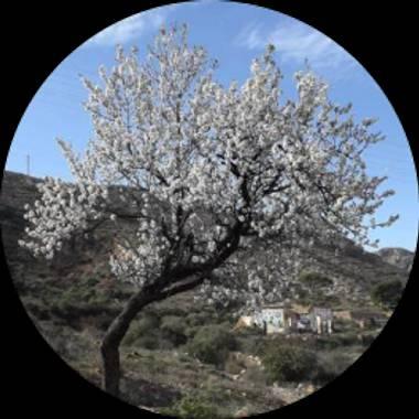 Usuario en Hamelin: lolilla_roazsb - Usuario  (Almería )