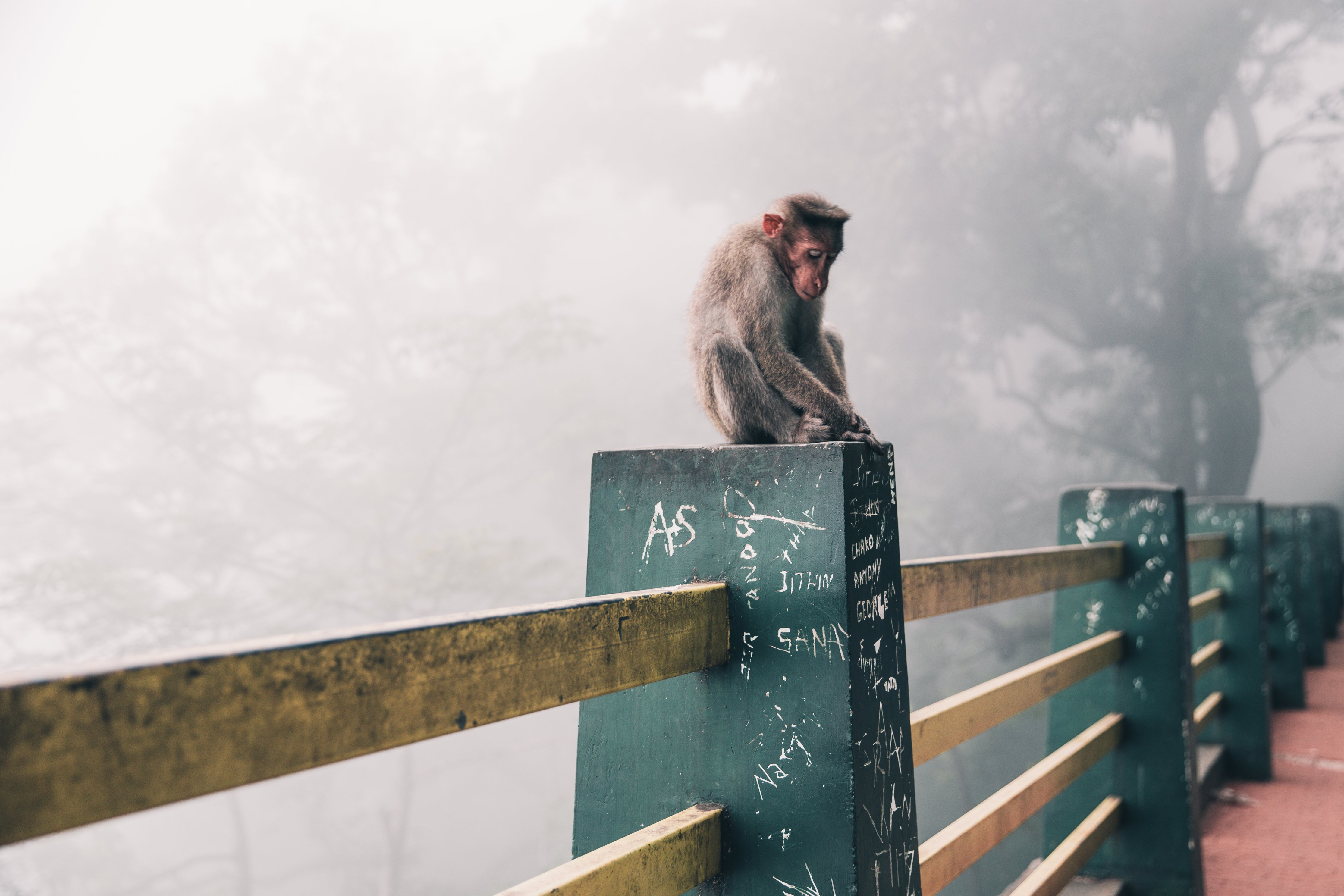 Image of 21 Monkey, a drinking game on Happy Stagger