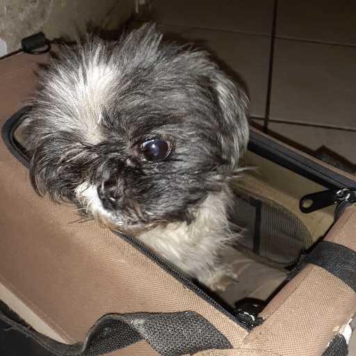 Image of Chico