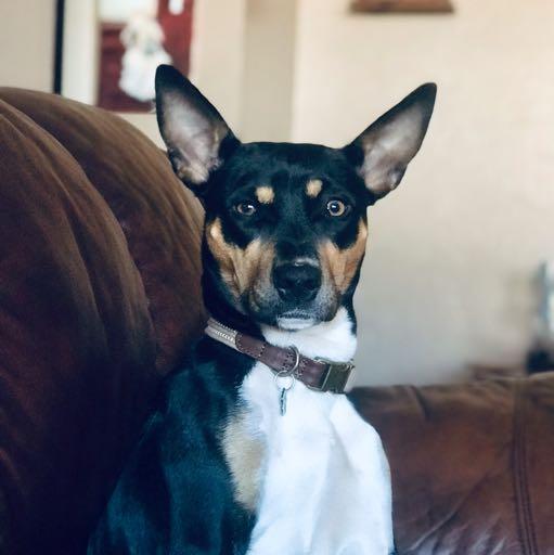 Image of Bailey