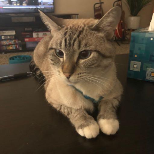 Image of Zelda