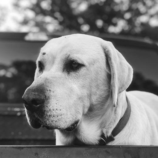 Image of Duke