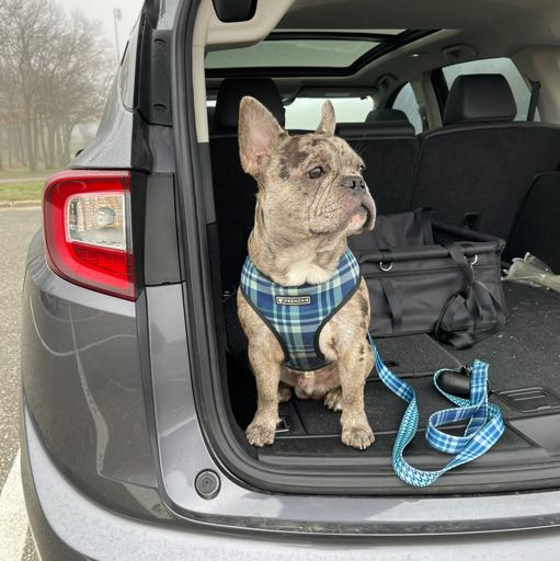 Image of Turbo